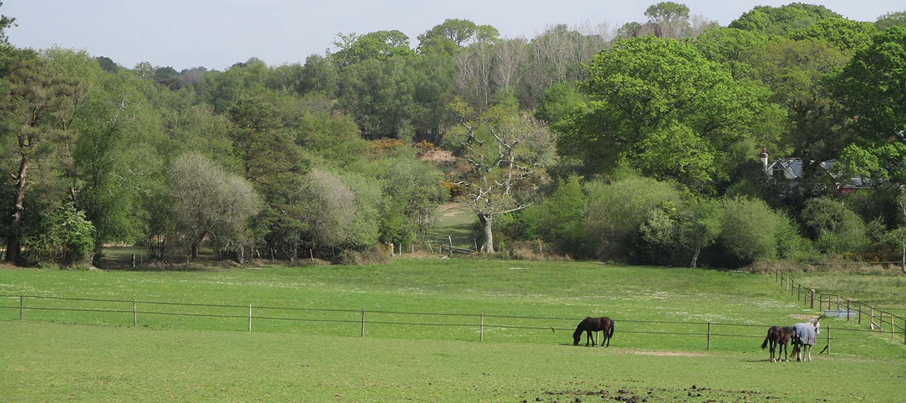 Grazing Land Dorset. Moses Rutland Chartered Surveyors.